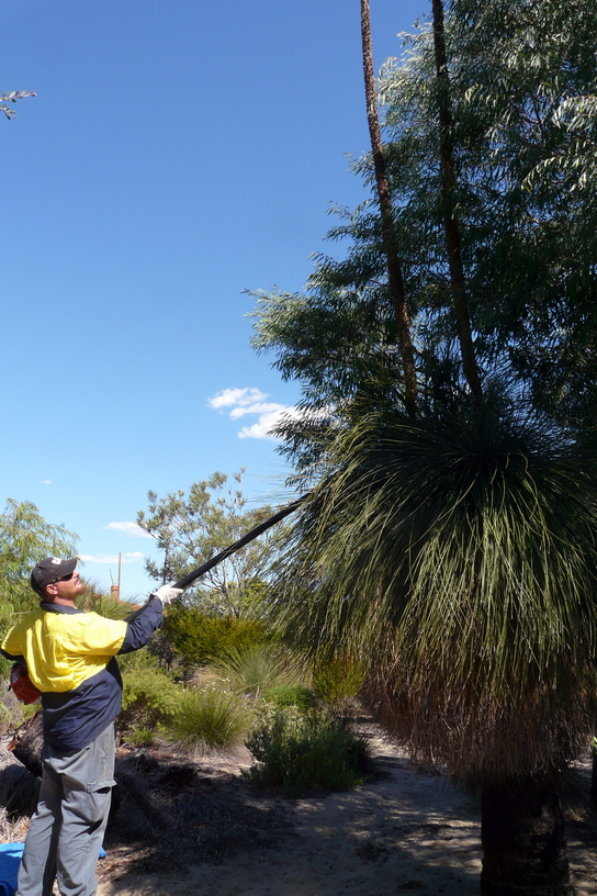 Jade collecting a grasstree spike at Cottesloe Native Garden