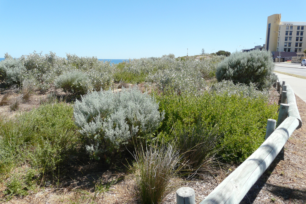 'After' Bryan Way foredune project 2010