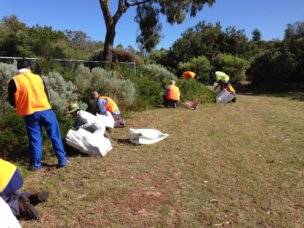 Starting work at Cottesloe Native Garden