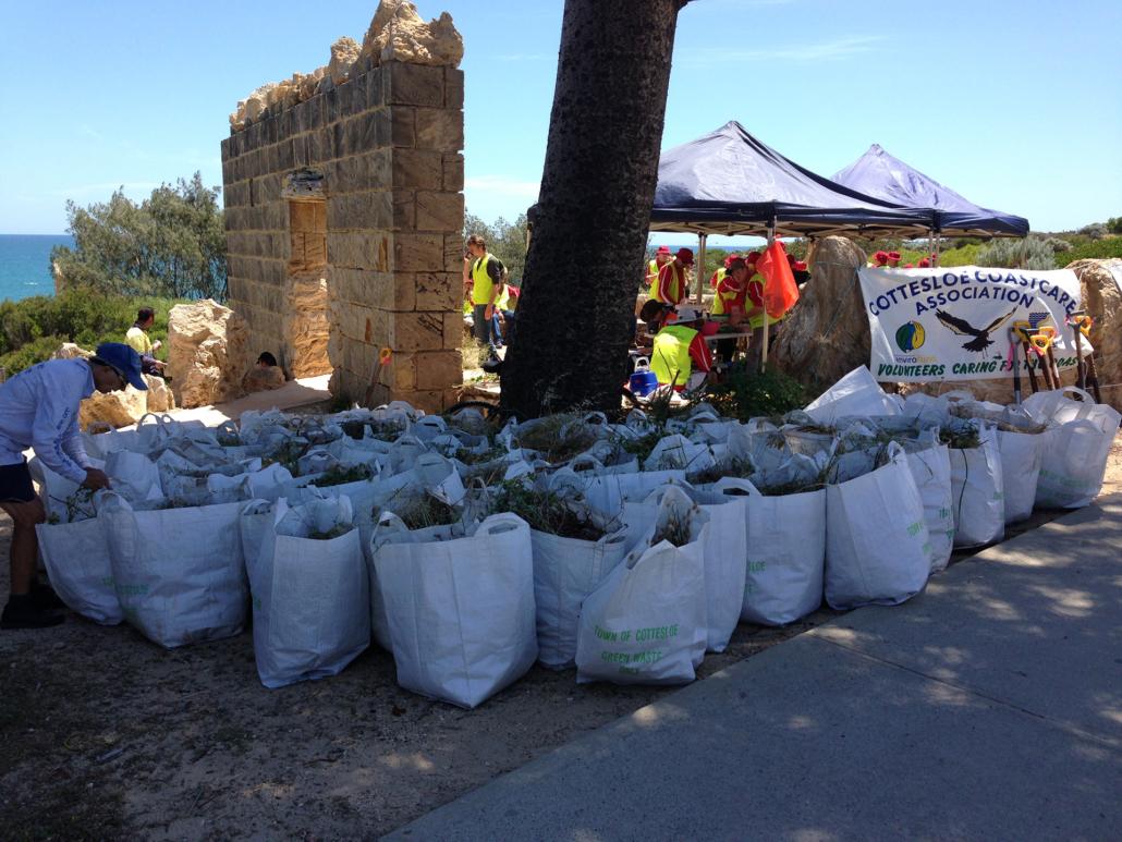 Bags of weeds at Mudurup rocks