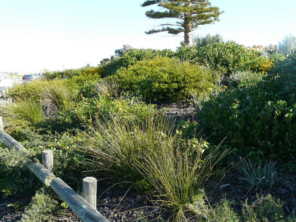 'After' Mudurup Rocks/ Synergy project – verge section