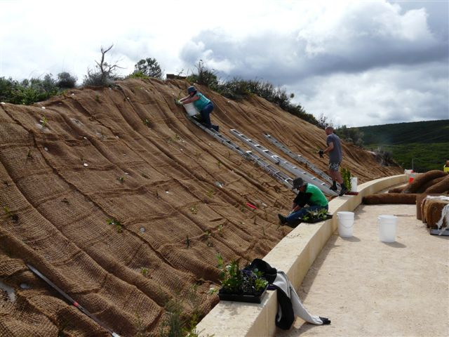 Matting and planting on an unstable dune