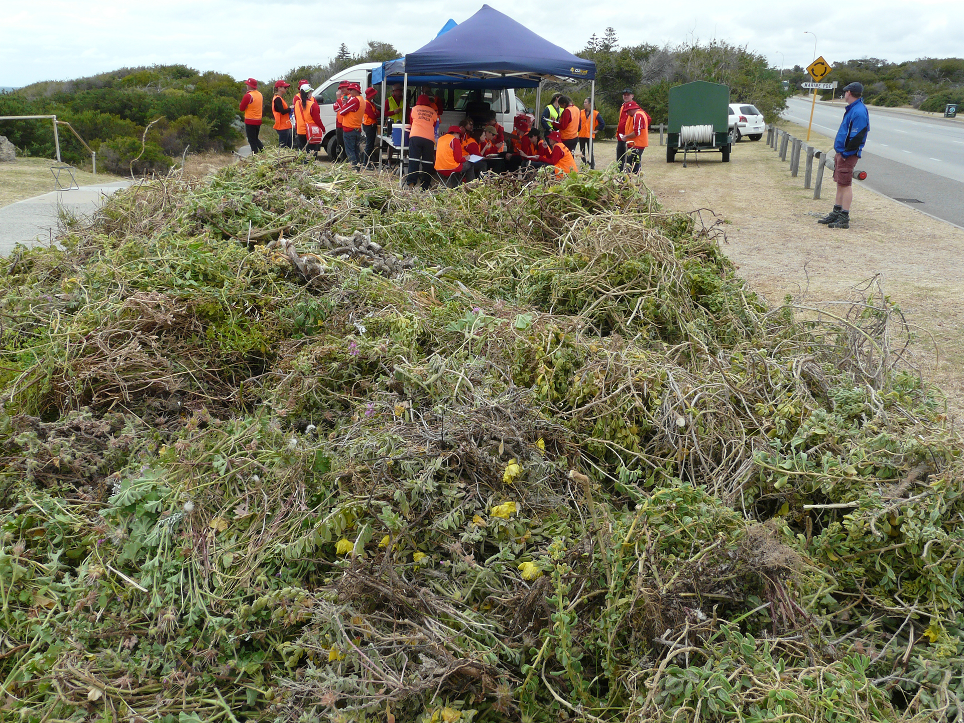 The pile of weeds near the lunch tent at Vlamingh Memorial