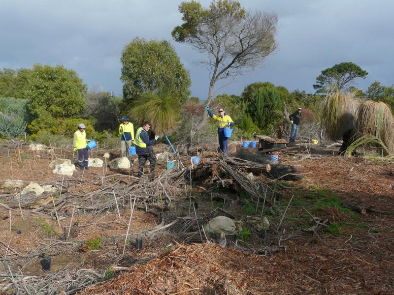 Planting at Cottesloe Native Garden